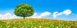 Blumenwiese mit Baum im Sommer als Panorama Hintergrund