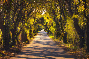 Autumn or fall, tree straight road on sunset. Maremma, Tuscany, Italy