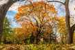 It's fall and the leaves are orange in this Montreal parc. This big maple tree is framed by two other on left and right. The sky is blue and cloudy.
