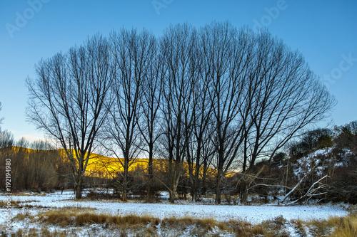 Plexiglas Berkenbos Albarracín en invierno