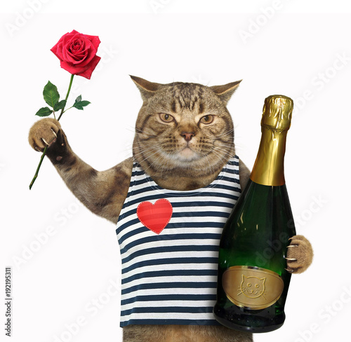 The cat holds a bottle of champagne and a red rose. White background.