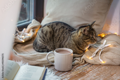 Papiers peints Chocolat tabby cat lying on window sill with book at home