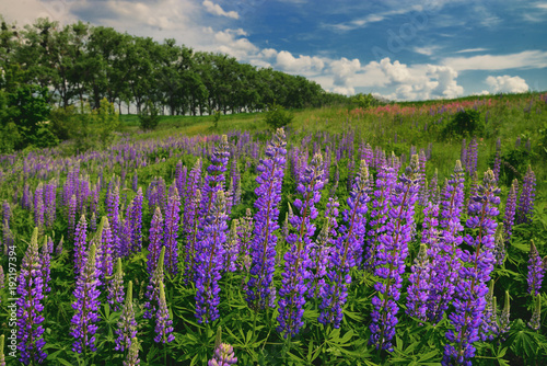 Fotobehang Lente Moody colorful landscape with lush flowers