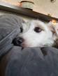 Terrier - 192201950