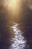 Der Weg ist das Ziel - Schneebedeckter WEg in der Abendsonne - 192202786