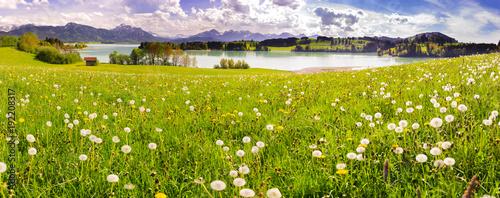Papiers peints Pistache Frühlingswiese im Allgäu mit Forggensee