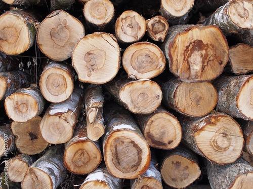 Birkenholz - Kuschelige Wärme für den Kaminofen