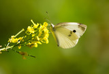 Butterfly on a yellow flower in the nature - 192210920