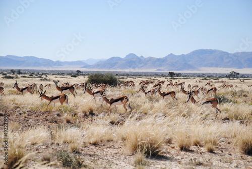 Foto op Plexiglas Blauwe hemel Springbock in Namibia