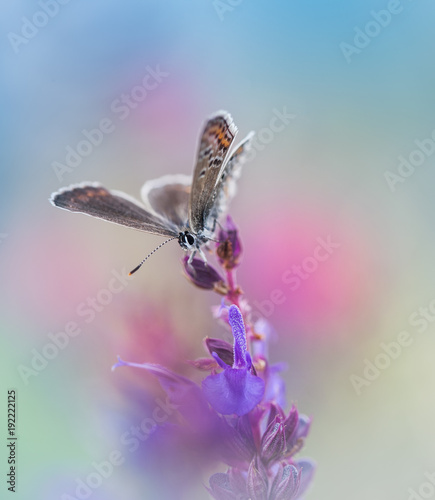 Fotobehang Vlinder Butterfly on pink flowers