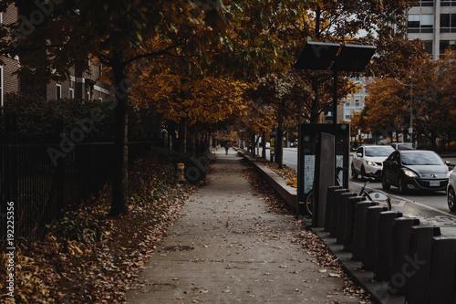 Fotobehang Canada fall leaves