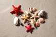 shells on the sand on a beautiful sunny day with room for inscription or advertising product