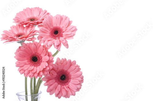 Fotobehang Gerbera Pink Daisy Bouquet Isolated on White