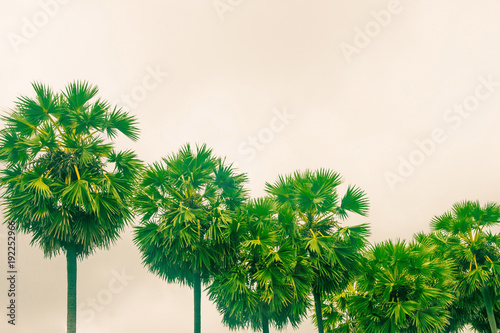 Aluminium Groene Green palms in the fog