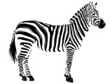 Zebra vettoriale