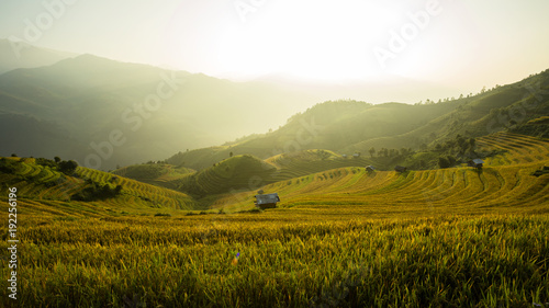 Keuken foto achterwand Rijstvelden Landscape rice field Vietnam