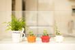 キッチンカウンターに並ぶ観葉植物
