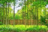 木洩れ日の竹林.