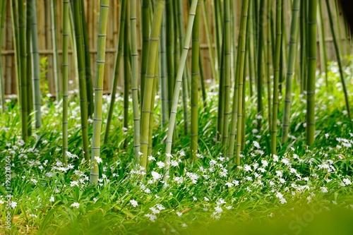 竹と花々.