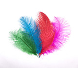 decorative colored feathers on white isolated background - 192276165