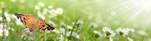 Foto op Canvas Pistache Schmetterling 429