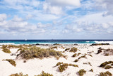 Sandy beach with coastal vegetation, Lanzerote - 192290560