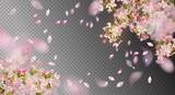 Spring Cherry Blossom - 192291378