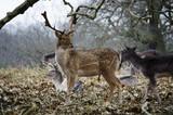 Deer - 192297965