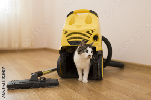 cat with a vacuum cleaner