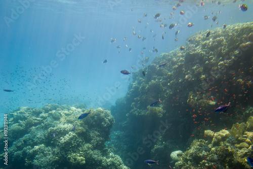 Fotobehang Blauw Underwater coral reef.