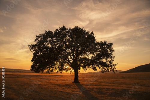 Fotobehang Zalm Tree at sunset