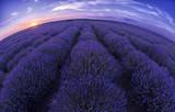 Lavender field - 192313771