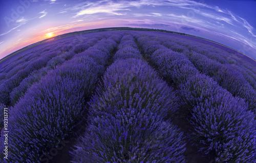 Aluminium Lavendel Lavender field