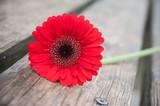 gerbera rouge coupé sur table en bois - 192314309