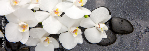 Spa stones and white orchid. © Swetlana Wall