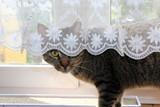 cat, animal, kitten, pet, cute, feline, domestic, fur, eyes