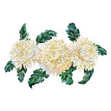 Bouquet of chrysanthemums. Watercolor. - 192328326