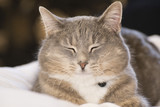 Cute gray cat with eyes closed