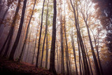Scary Autumn Forest - 192332922