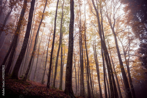 Scary Autumn Forest