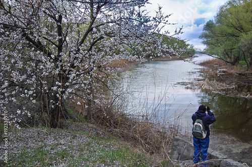 Fotobehang Lente Spring flowering wild apricot on the river bank