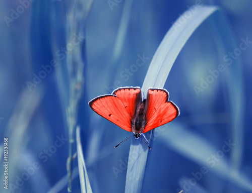 Fotobehang Vlinder bright orange little butterfly sits on the background of a blue beautiful meadow