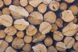 Storage of logs. Collapsed tree trunks - 192338904