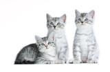 Drei getigerte Kätzchen isoliert auf weißem Grund