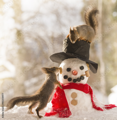 Foto Murales red squirrels standing with an snowman