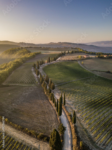 Foto op Canvas Wijngaard Sunny way trough Tuscany