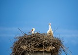 White storks sitting in its nest on a roof in Germany during summer time - 192366919