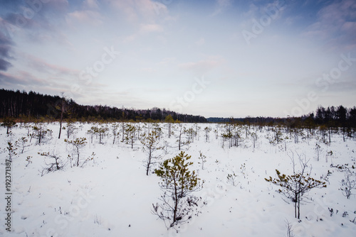 Evening view of snowy swamp in winter