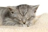 Schlafendes Kätzchen isoliert auf weißem Grund