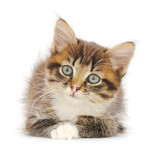 Kitten on white background. - 192378933